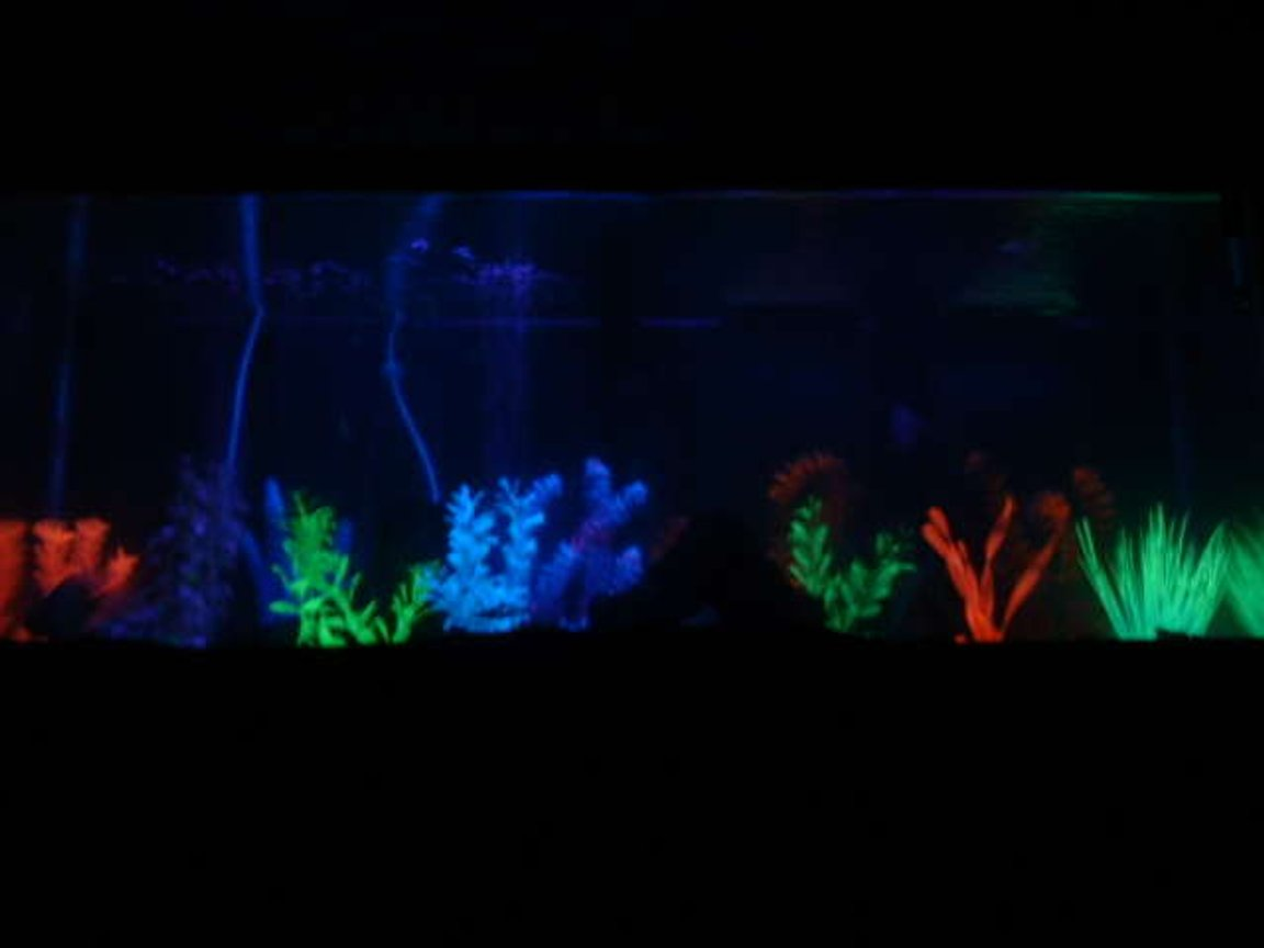 90 gallons freshwater fish tank (mostly fish and non-living decorations) - my 75 gal. at night with the black light on