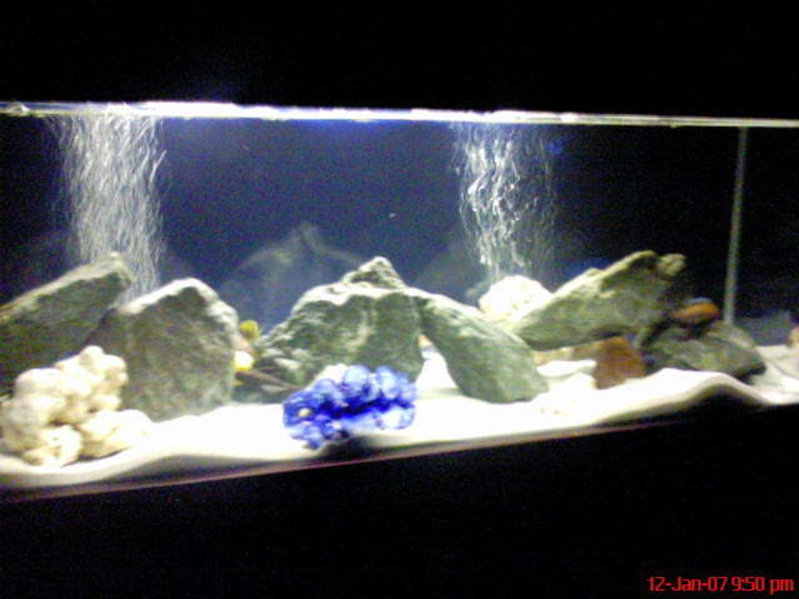 60 gallons freshwater fish tank (mostly fish and non-living decorations) - White sand, blue rocks, blue bacground!!! looks awesome at night time with the beautiful colours of the fish!!