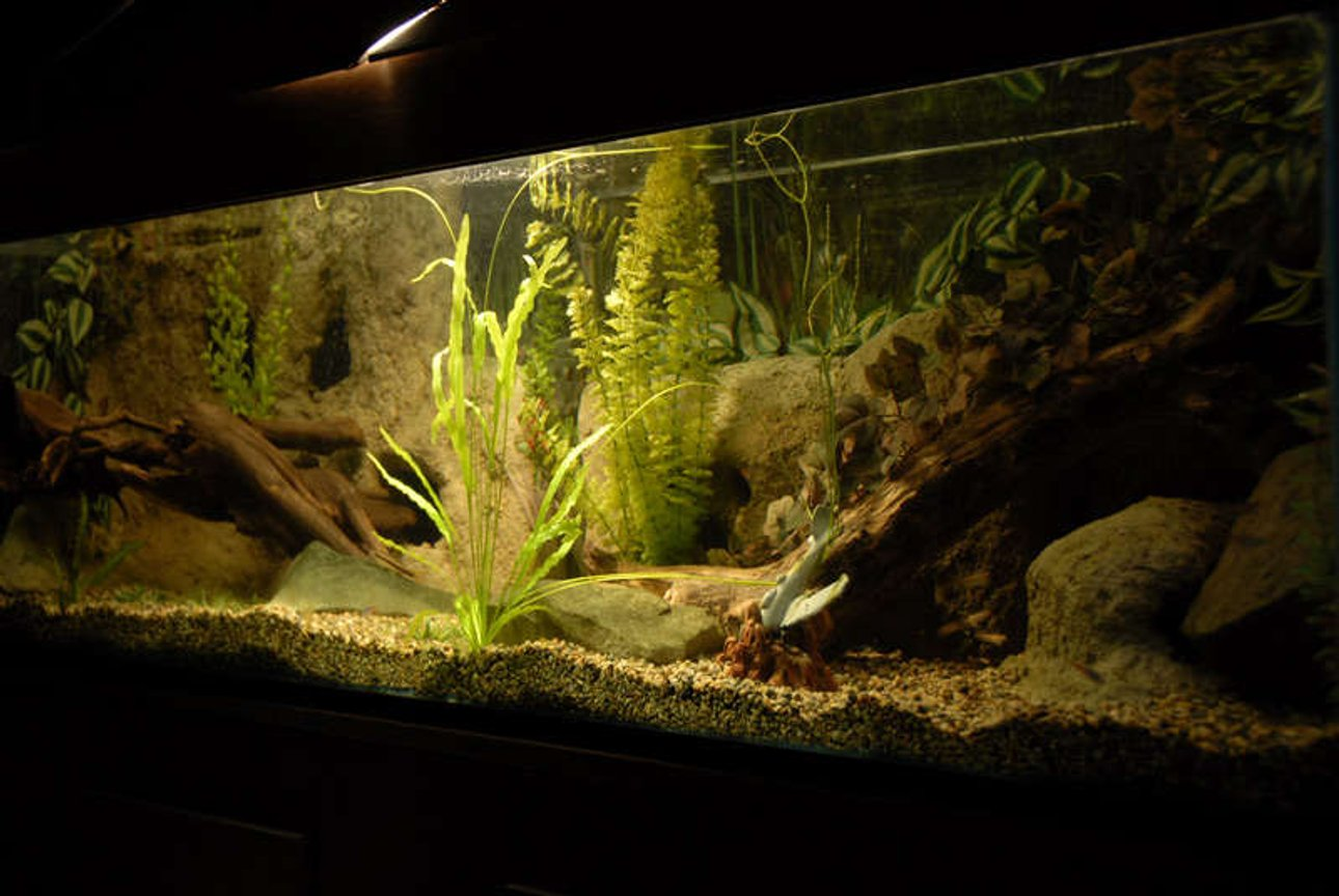 120 gallons freshwater fish tank (mostly fish and non-living decorations) - My Tank.