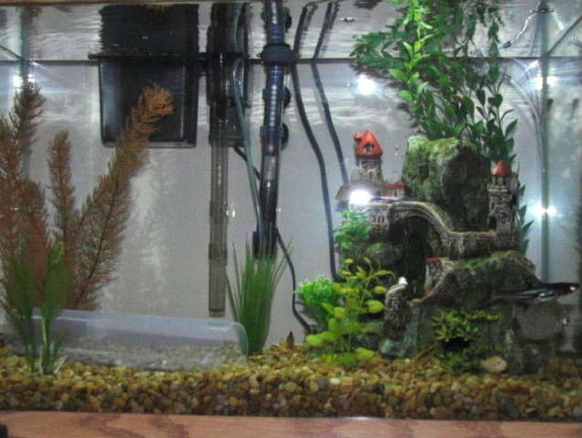 20 gallons freshwater fish tank (mostly fish and non-living decorations) - 20 gallon rectangle shape tank.