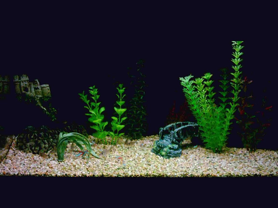 12 gallons freshwater fish tank (mostly fish and non-living decorations) - My beauty
