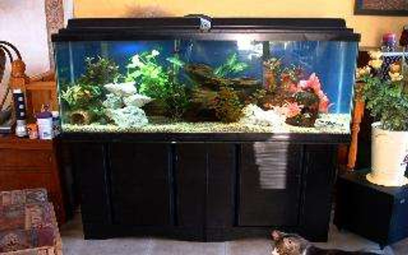 55 gallons freshwater fish tank (mostly fish and non-living decorations) - This is a global view of my 55gal tank