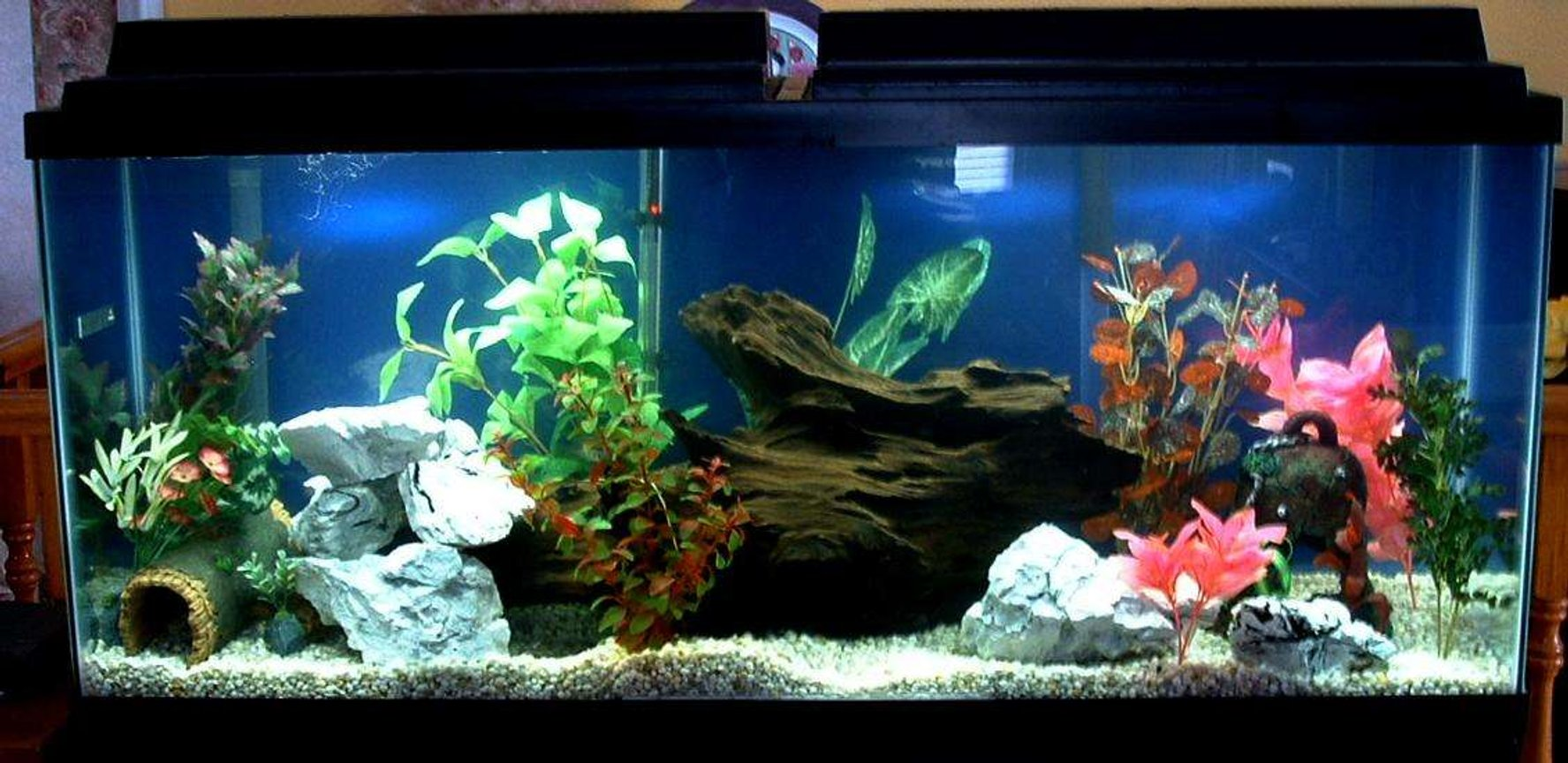 55 gallons freshwater fish tank (mostly fish and non-living decorations) - Close up of my 55 gal aquarium