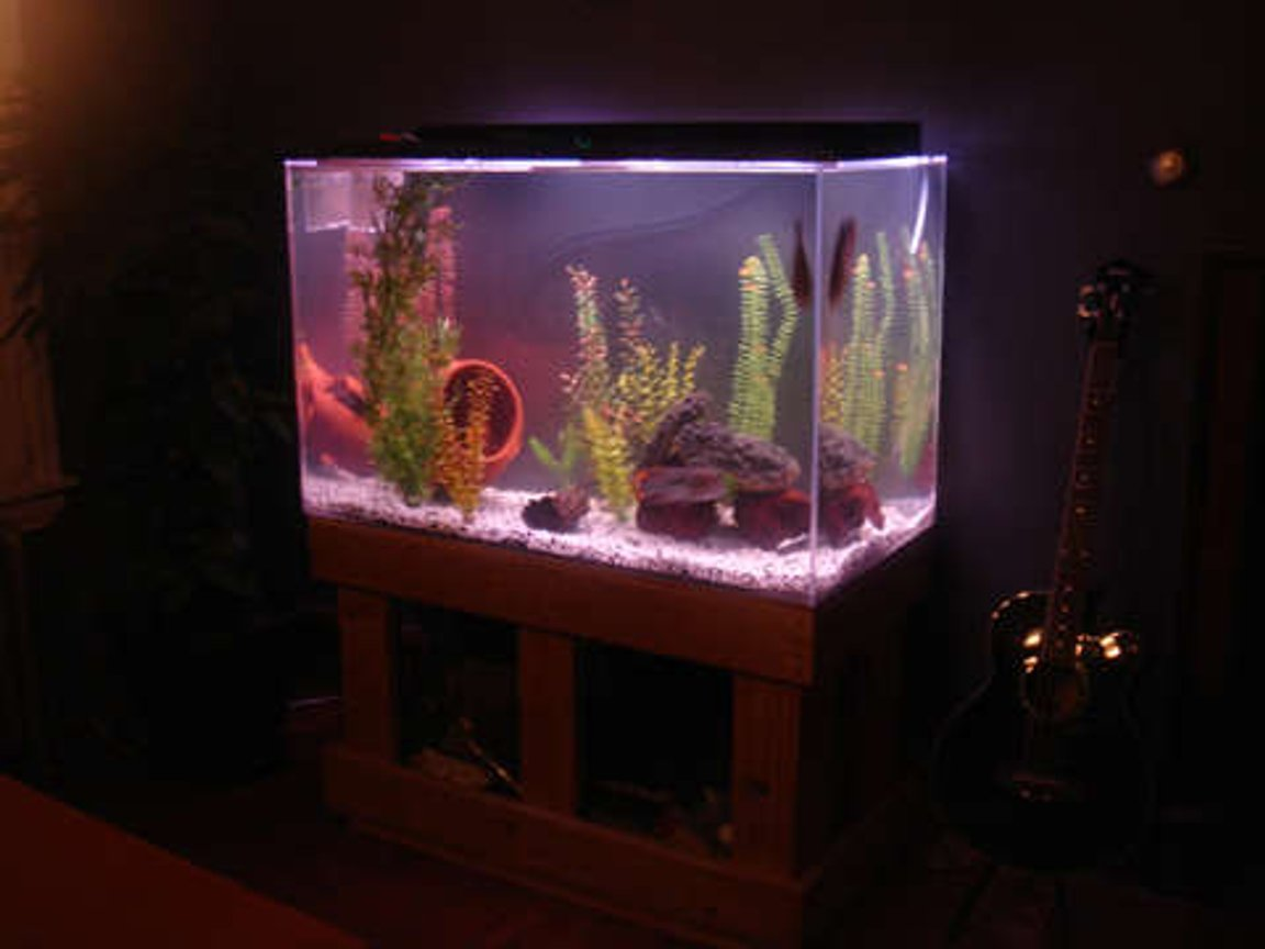 150 gallons freshwater fish tank (mostly fish and non-living decorations) - my 150 Gallon STILL NOT BIG ENOUGH