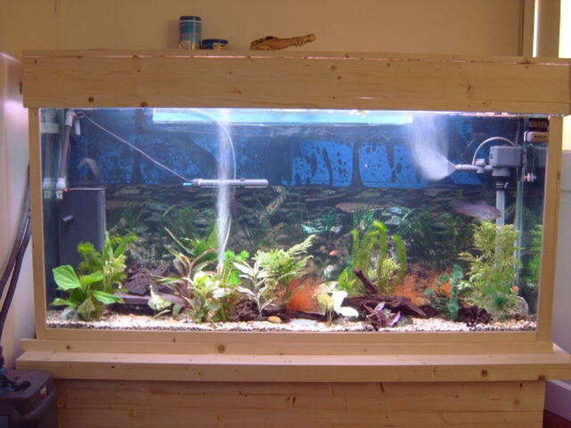 75 gallons freshwater fish tank (mostly fish and non-living decorations) - this is my beloved tank.