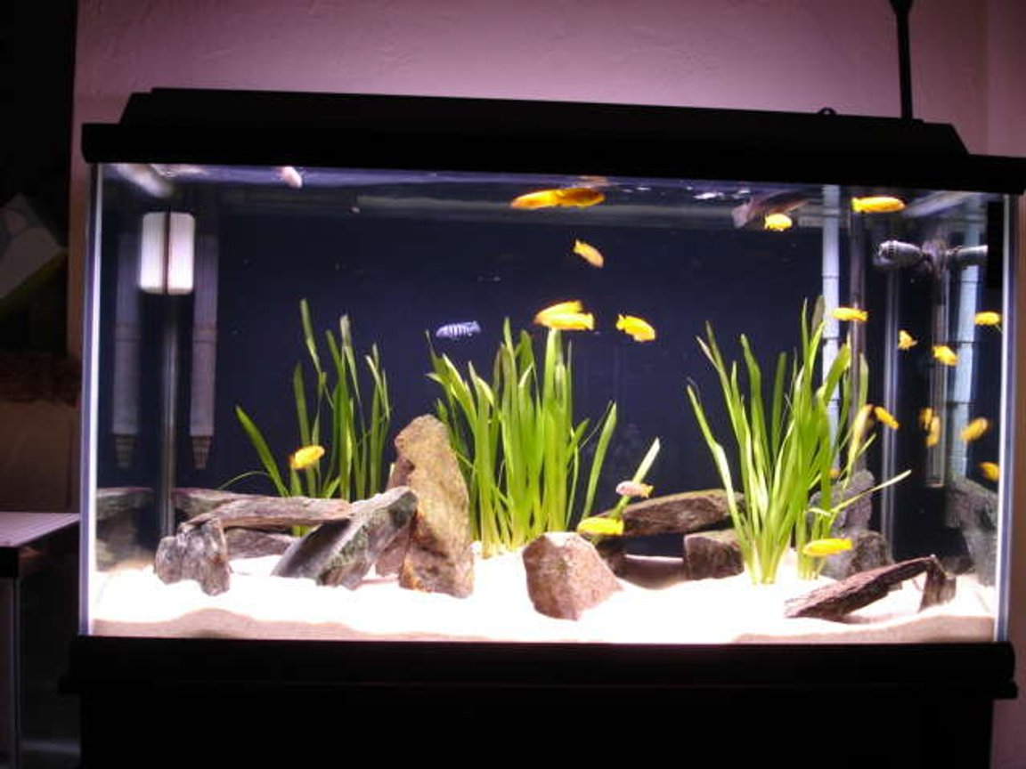 125 gallons freshwater fish tank (mostly fish and non-living decorations) - 58 gallon saulosi species tank