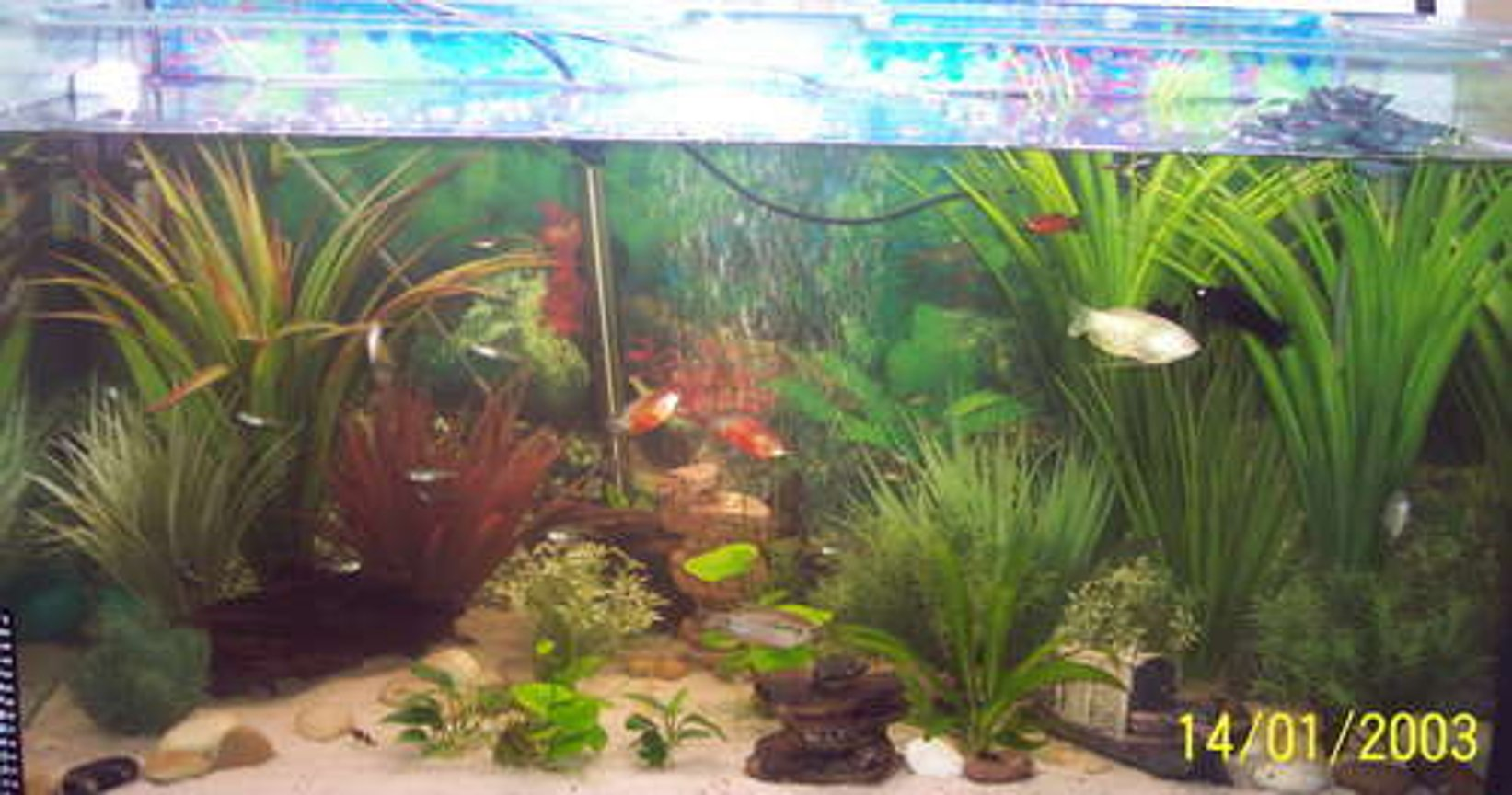 45 gallons freshwater fish tank (mostly fish and non-living decorations) - 160L Community Tank (Date on the pic os wrong)