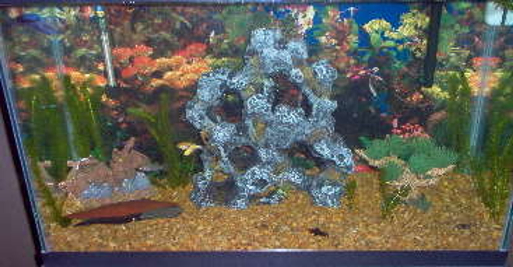 30 gallons freshwater fish tank (mostly fish and non-living decorations) - 30 gallon