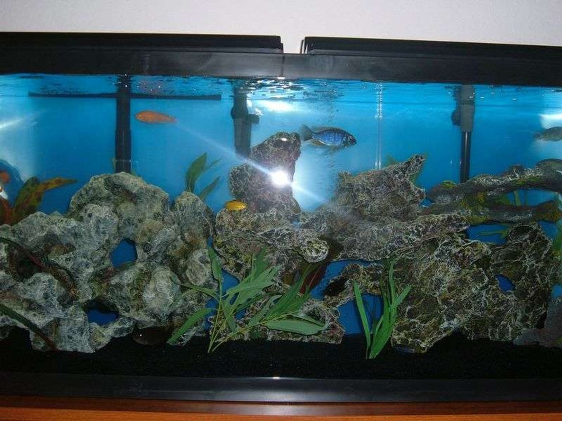 55 gallons freshwater fish tank (mostly fish and non-living decorations) - Whole tank view