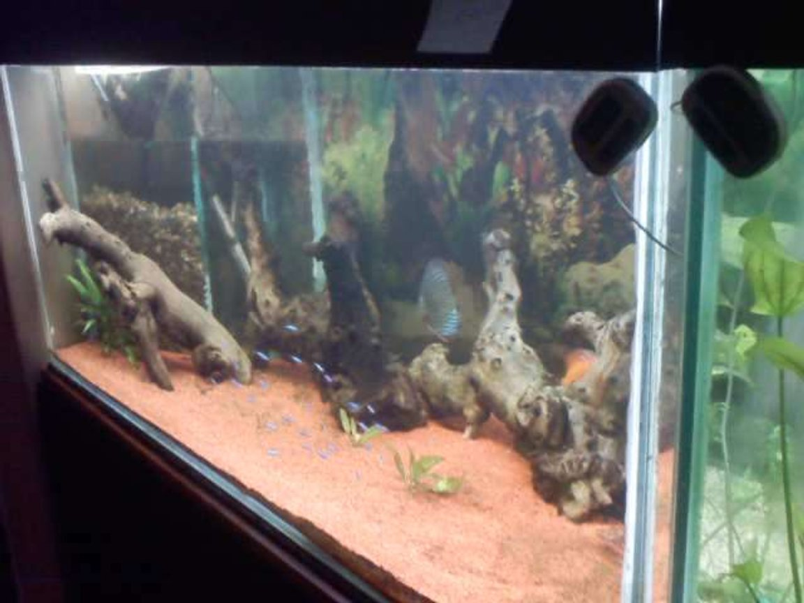 55 gallons freshwater fish tank (mostly fish and non-living decorations) - na