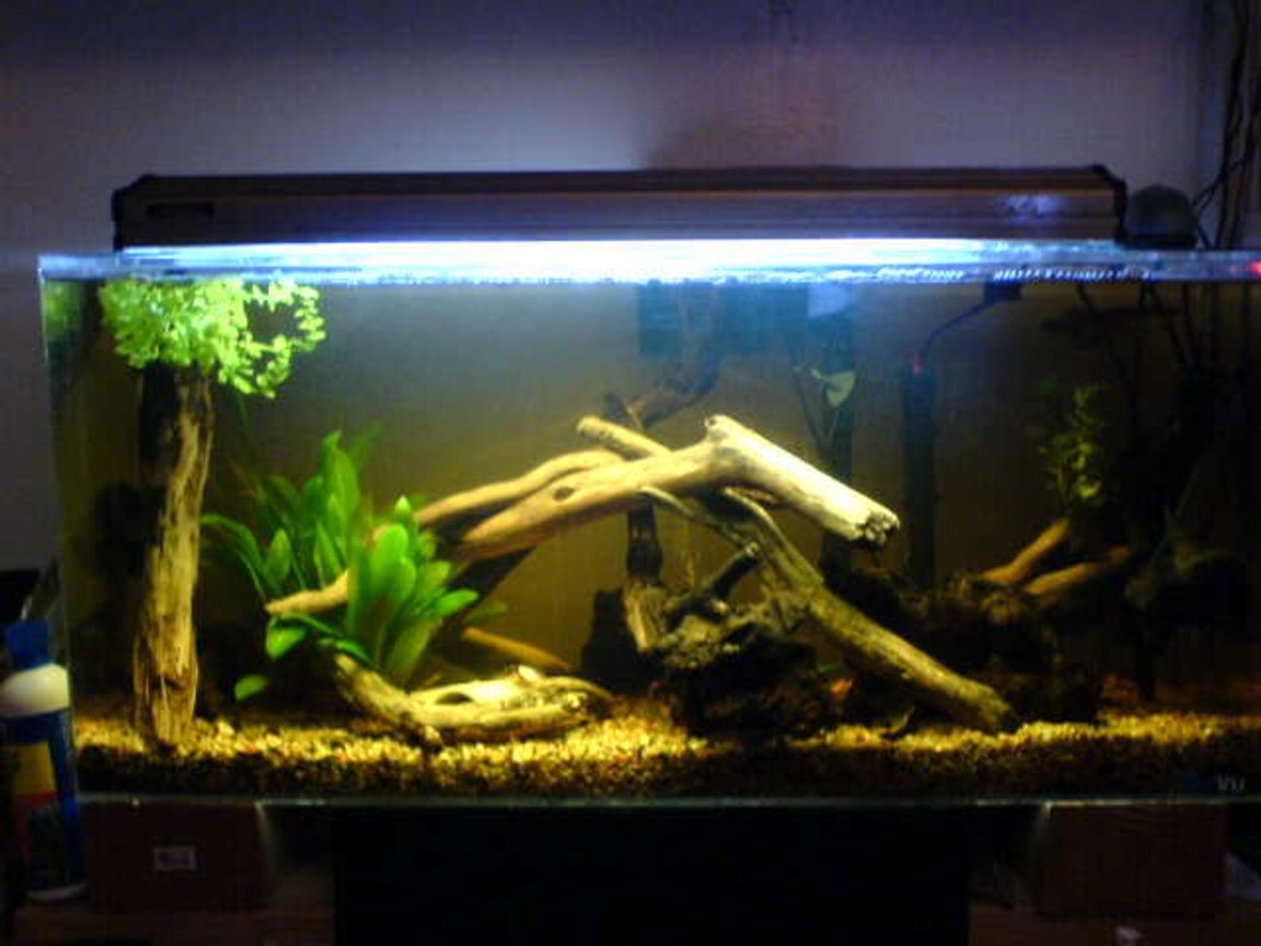 26 gallons freshwater fish tank (mostly fish and non-living decorations)