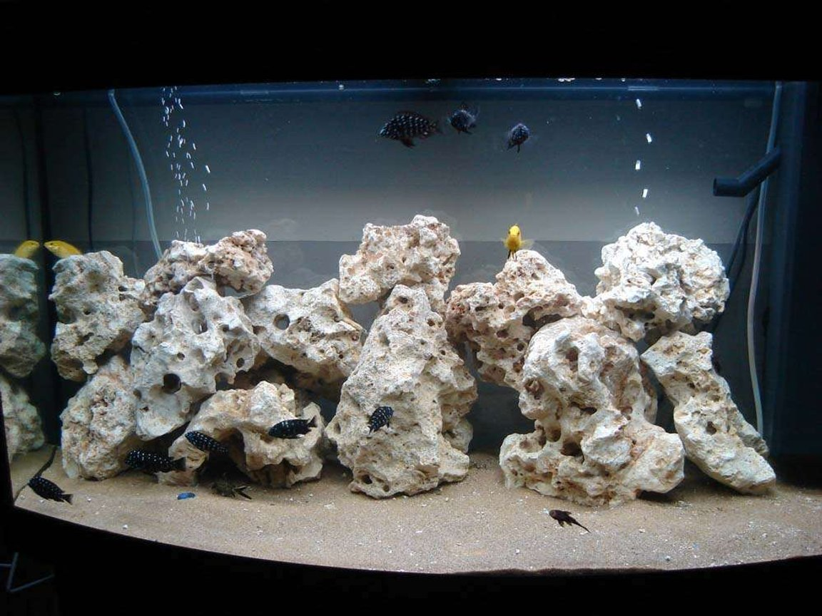 40 gallons freshwater fish tank (mostly fish and non-living decorations) - duboisi tank