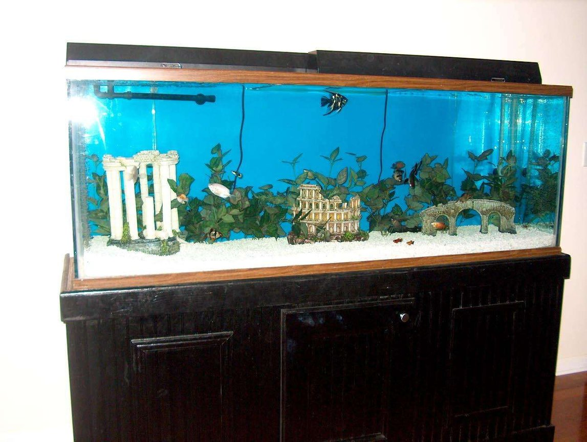 150 gallons freshwater fish tank (mostly fish and non-living decorations) - Taken after moving to new house.