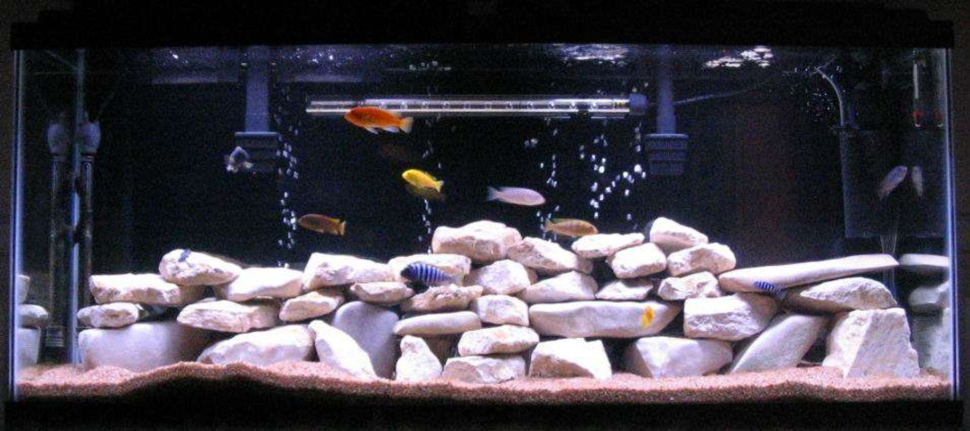 55 gallons freshwater fish tank (mostly fish and non-living decorations) - 55 gallon tank with 12 African cichlids and 1 African catfish
