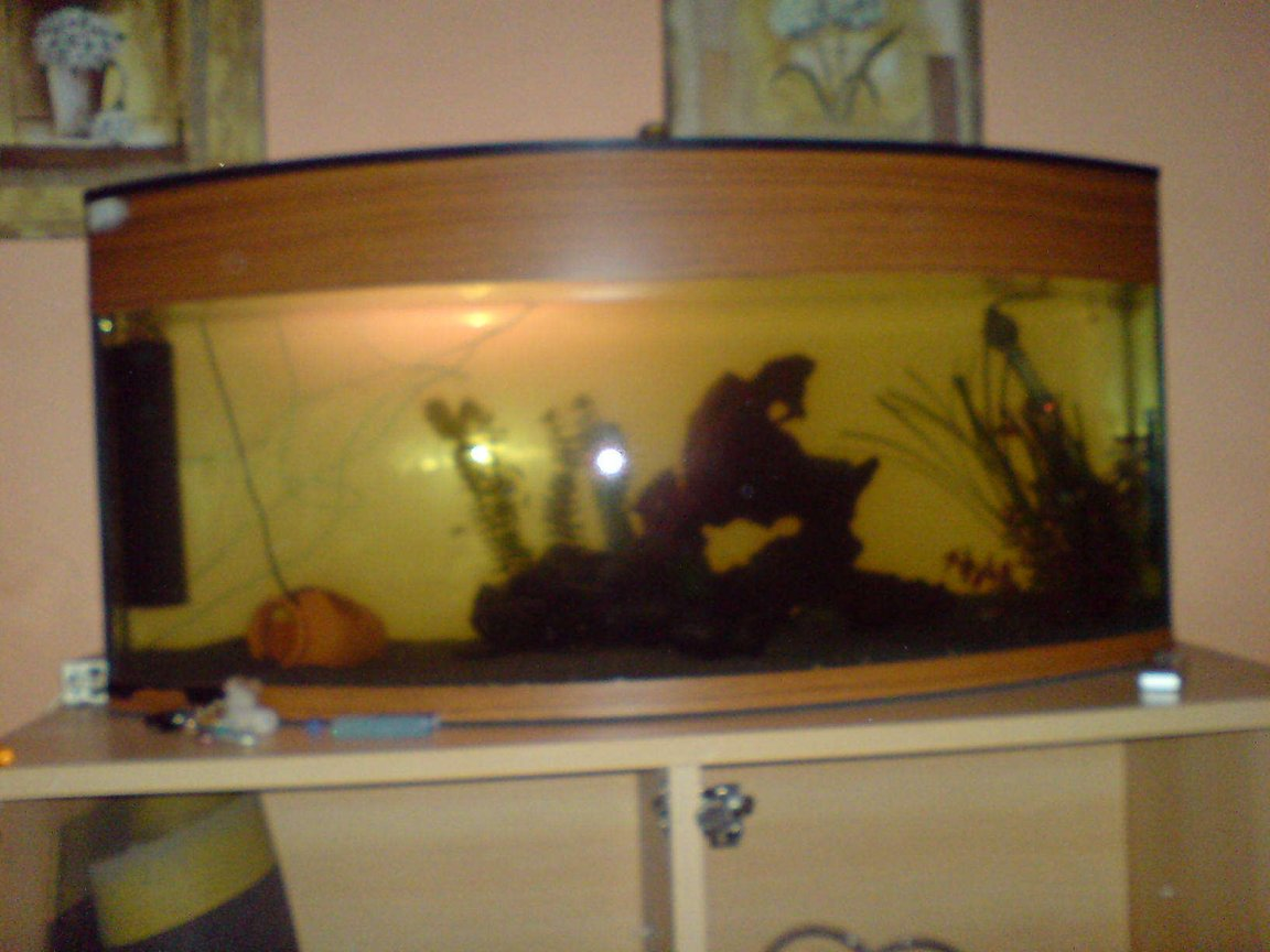 50 gallons freshwater fish tank (mostly fish and non-living decorations) - i cant seem to get a good pic but will try again and get it on here asap