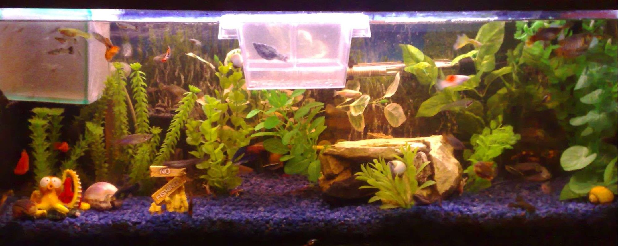 22 gallons freshwater fish tank (mostly fish and non-living decorations) - just added some new plants
