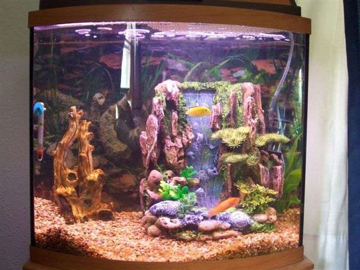 125 gallons freshwater fish tank (mostly fish and non-living decorations) - My 16gal freshwater w/t 2 cichlids.