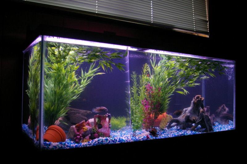 Fishlover24 39 s freshwater tanks photo id 22402 full for Spacearium aquariums