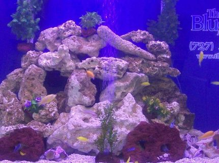 500 gallons freshwater fish tank (mostly fish and non-living decorations) - 500 gal fresh water tank