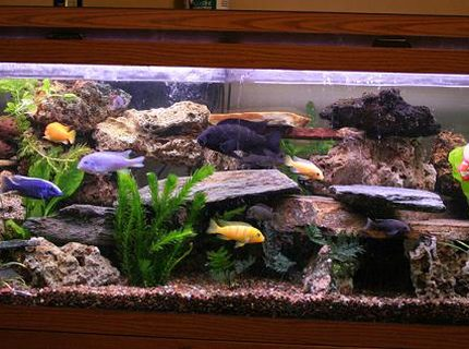Rated #6: 75 Gallons Freshwater Fish Tank - this is an updated picture of my previous one.  i had to move to my new home, luckly everyone made it here with me.