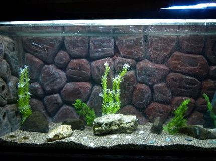50 gallons freshwater fish tank (mostly fish and non-living decorations) - my new DIY