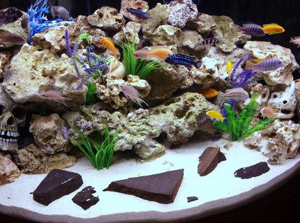 Rated #8: 90 Gallons Freshwater Fish Tank - Our Front Room Malawi Aquarium