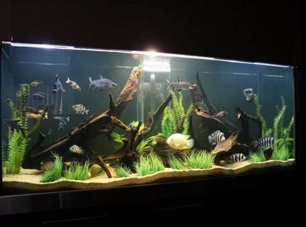 Rated #6: 245 Gallons Freshwater Fish Tank - cichlid tank!