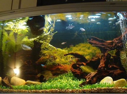 Rated #15: 44 Gallons Freshwater Fish Tank - My setup