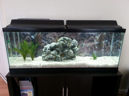 50 gallons freshwater fish tank (mostly fish and non-living decorations) - My New 50 Gallon Tank