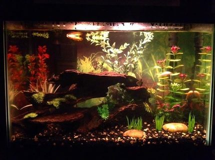 20 gallons freshwater fish tank (mostly fish and non-living decorations) - My tank with Golden Wonder lurking
