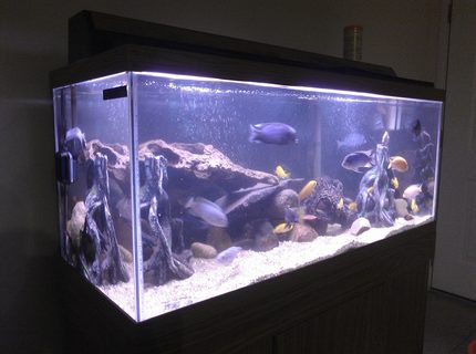 20 gallons freshwater fish tank (mostly fish and non-living decorations) - about 75 gallons with lots of mix cichlids 