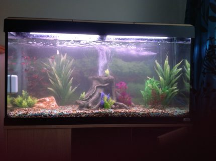 44 gallons freshwater fish tank (mostly fish and non-living decorations) - Tank in mid cycle, no fish yet