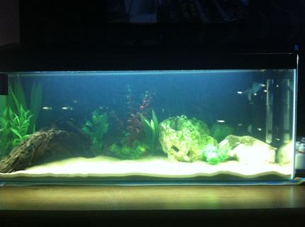 23 gallons freshwater fish tank (mostly fish and non-living decorations)