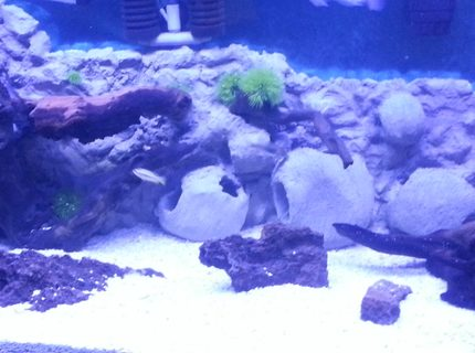 90 gallons freshwater fish tank (mostly fish and non-living decorations) - African cichlid tank