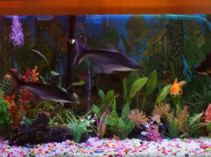 250 gallons freshwater fish tank (mostly fish and non-living decorations) - 100 G Freshwater Tank with some live plants.