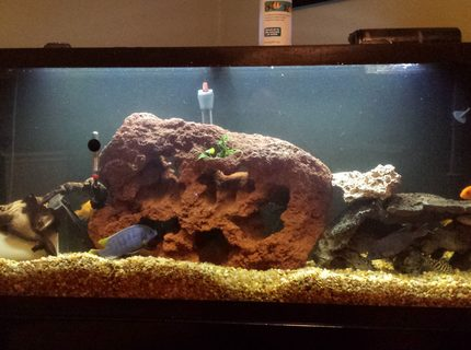 50 gallons freshwater fish tank (mostly fish and non-living decorations) - 55 gallon with new lava rock