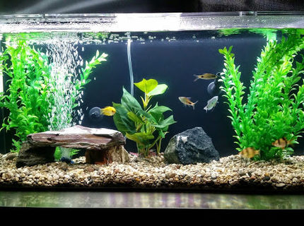Rated #7: 35 Gallons Freshwater Fish Tank - My tank!