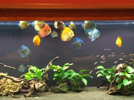 Rated #9: 180 Gallons Freshwater Fish Tank - 180 Gallon Discus