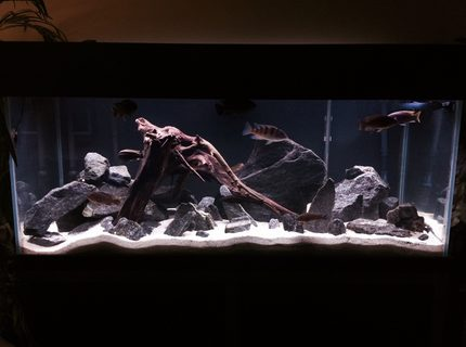 Rated #4: 75 Gallons Freshwater Fish Tank - New setup