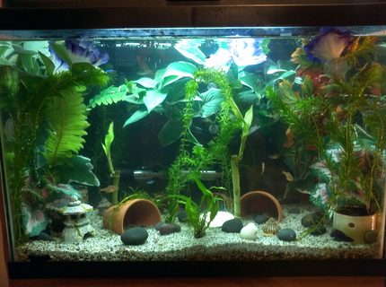 20 gallons freshwater fish tank (mostly fish and non-living decorations) - 20 gal freshwater community tank
