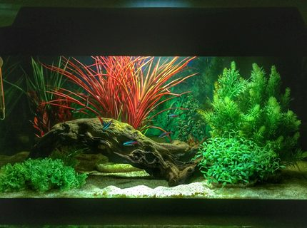 Rated #1: 14 Gallons Freshwater Fish Tank - First tank.  Set up for my boys, but I already have an unhealthy obsession....