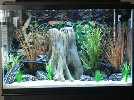 45 gallons freshwater fish tank (mostly fish and non-living decorations) - Freshwater Tank - Juvenile Cichlids
