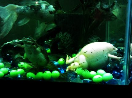 35 gallons freshwater fish tank (mostly fish and non-living decorations) - My 4 pets