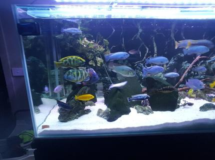 125 gallons freshwater fish tank (mostly fish and non-living decorations) - Random2