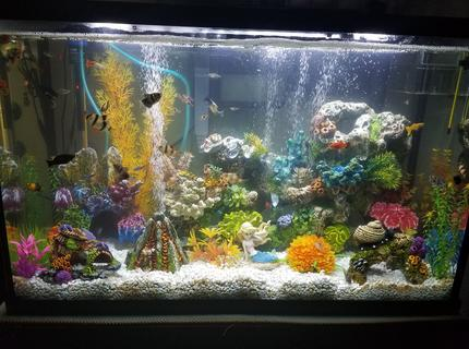 30 gallons freshwater fish tank (mostly fish and non-living decorations) - My tropical community tank!