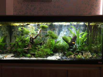 63 gallons freshwater fish tank (mostly fish and non-living decorations) - Gondor