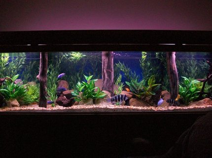 350 gallons freshwater fish tank (mostly fish and non-living decorations) - 350 gal