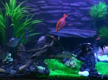 260 gallons freshwater fish tank (mostly fish and non-living decorations) - complete  Tank