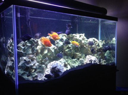 90 gallons freshwater fish tank (mostly fish and non-living decorations) - My 90 Gallon