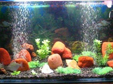 45 gallons freshwater fish tank (mostly fish and non-living decorations) - Ayantika's Aquarium